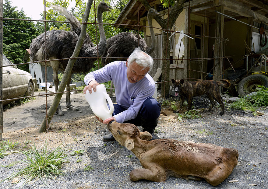 para - Qué hacer ante un caso de maltrato animal Guardian-fukushima-abandoned-animals-naoto-matsumura-9