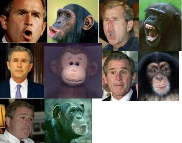 Il n'est même pas encore 5 heures du soir... Bush-singe