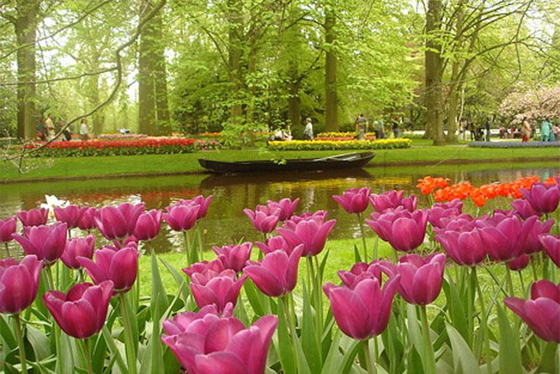 Vrtovi - Page 6 Basta-sadrzi-vise-od-sedam-miliona-lala