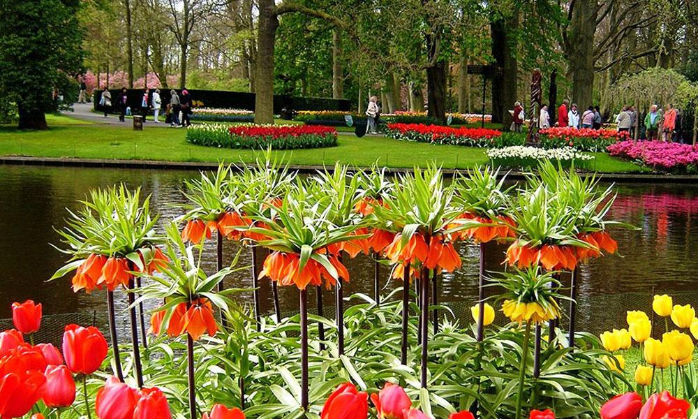 Vrtovi - Page 6 Keukenhof-je-najveca-basta-na-svetu