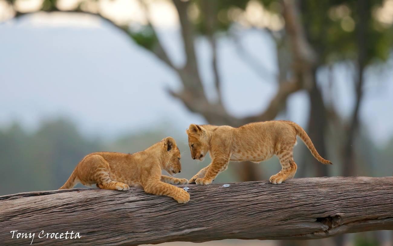 Tribut à Tony Crocetta, photographe animalier 17212041_1726201441005476_4409147138168182893_o
