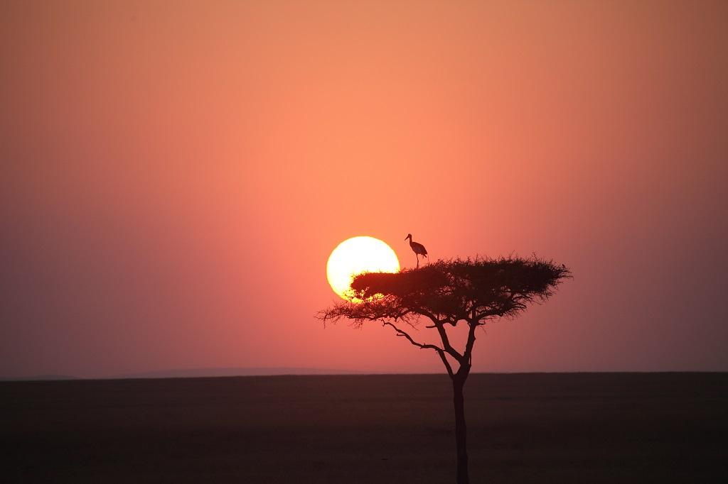 Lever de soleil dans la réserve du Maasaï Mara IMG_7807-1024