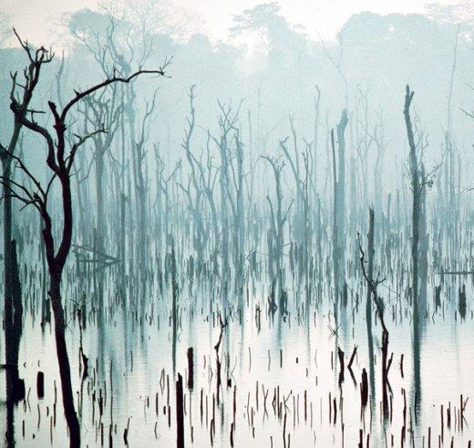 Dossier : comment sauver les forêts Foret-520x491