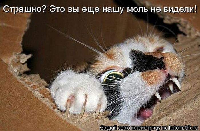 Кошачий юмор - Страница 8 1308875334_kotomatritsa-1
