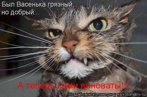 Котоматрица 1330940332_18