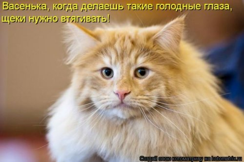Котоматрица 1330940383_1