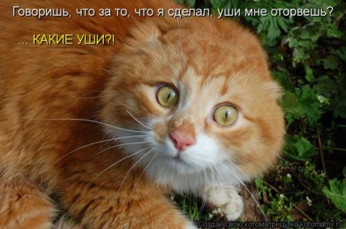 Котоматрица 1330940386_27