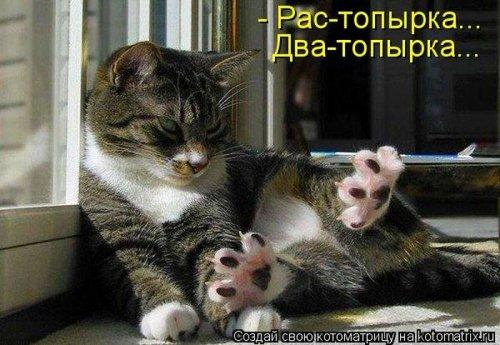 Котоматрица 1341573585_kotomatricy-1