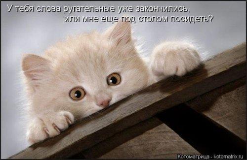 Котоматрица 1341573659_kotomatricy-29