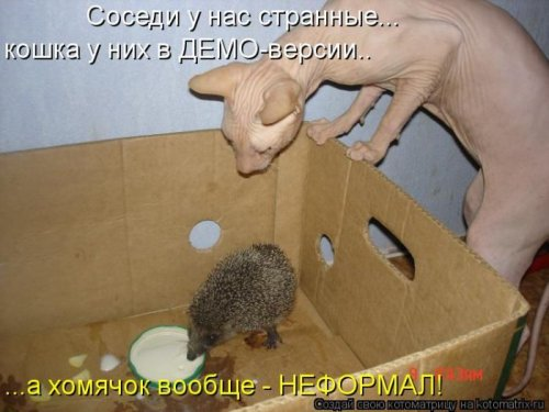 Котоматрица 1341573660_kotomatricy-13