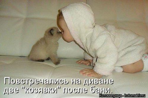 Котоматрица 1362086196_novye-kotomatricy-28