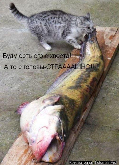 Котоматрица 1362687736_veselye-kotomatricy-7