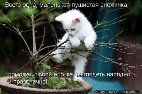 Котоматрица 1362687750_veselye-kotomatricy-18