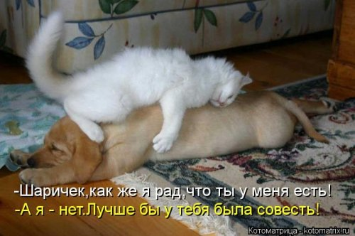 Котоматрица 1362687804_veselye-kotomatricy-25