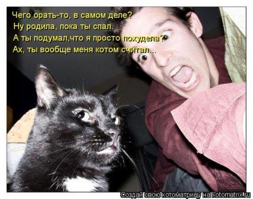 Котоматрица 1362687809_veselye-kotomatricy-4