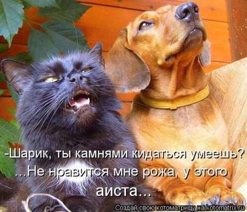 Котоматрица 1362687820_veselye-kotomatricy-15