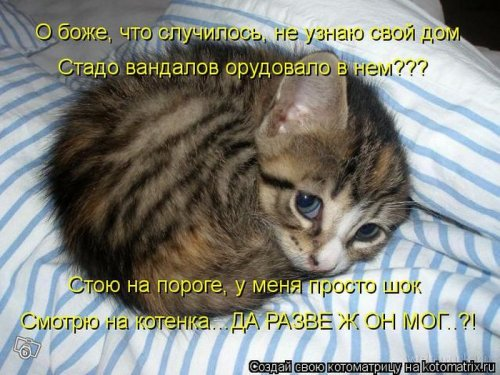 Котоматрица 1362687828_veselye-kotomatricy-26