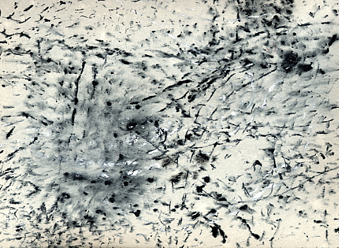Ressam böcekler Ba0024
