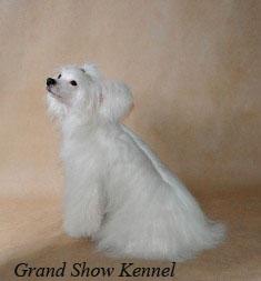Китайская хохлатая  собака! 1