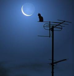 Магические советы на каждый день. Лунный календарь. Гороскоп. - Страница 3 5515