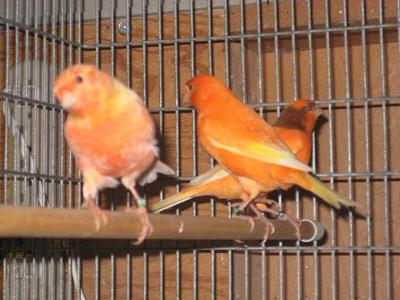 I want...A !!!!! I-only-have-3-pet-canaries-21392891