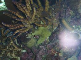 nécrose des coraux Post-986-0-50658200-1381661161