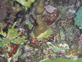 nécrose des coraux Post-986-0-75639800-1381661132