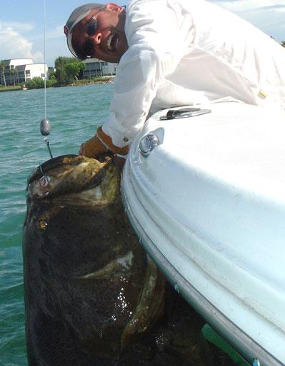 Escrito La Pesca del Mero por José Manuel López Pinto Grouper_5