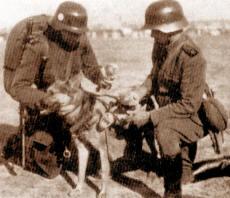 Influencia alemana en los uniformes argentinos Argperro