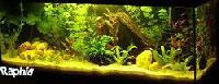 un aquarium sans changement d'eau Mini_070309075545378314