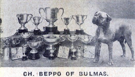 Как выглядели первые бульмастифы Bullmastiff_BeppooffBullmas