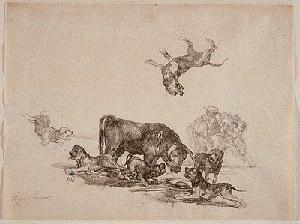 Как выглядели первые бульмастифы Bullmastiff_acosado
