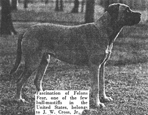 Как выглядели первые бульмастифы Bullmastiff_anti2