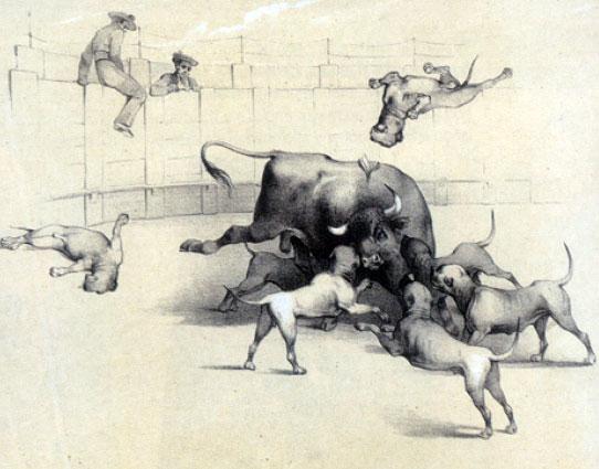 Как выглядели первые бульмастифы Bullmastiff_corrida