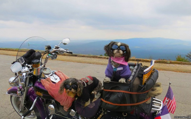DOG'S & BIKES ATTITUDES - Page 2 1_CATERS_Dogs_On_Bike_-02-800x498