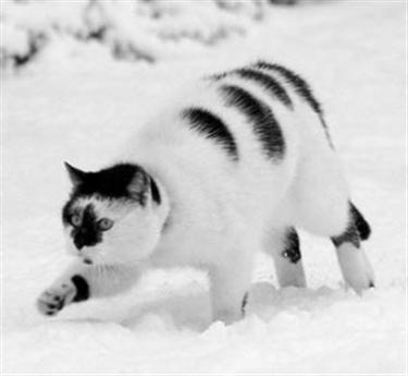 2011 WinterFest! {{OPEN EVENT!}} Cat-in-snow