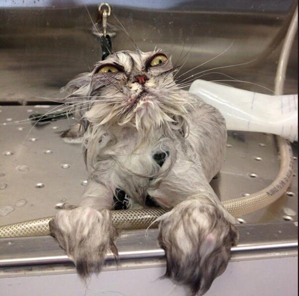 ¿Dulce o Truco? - Página 6 Cat-bath-full