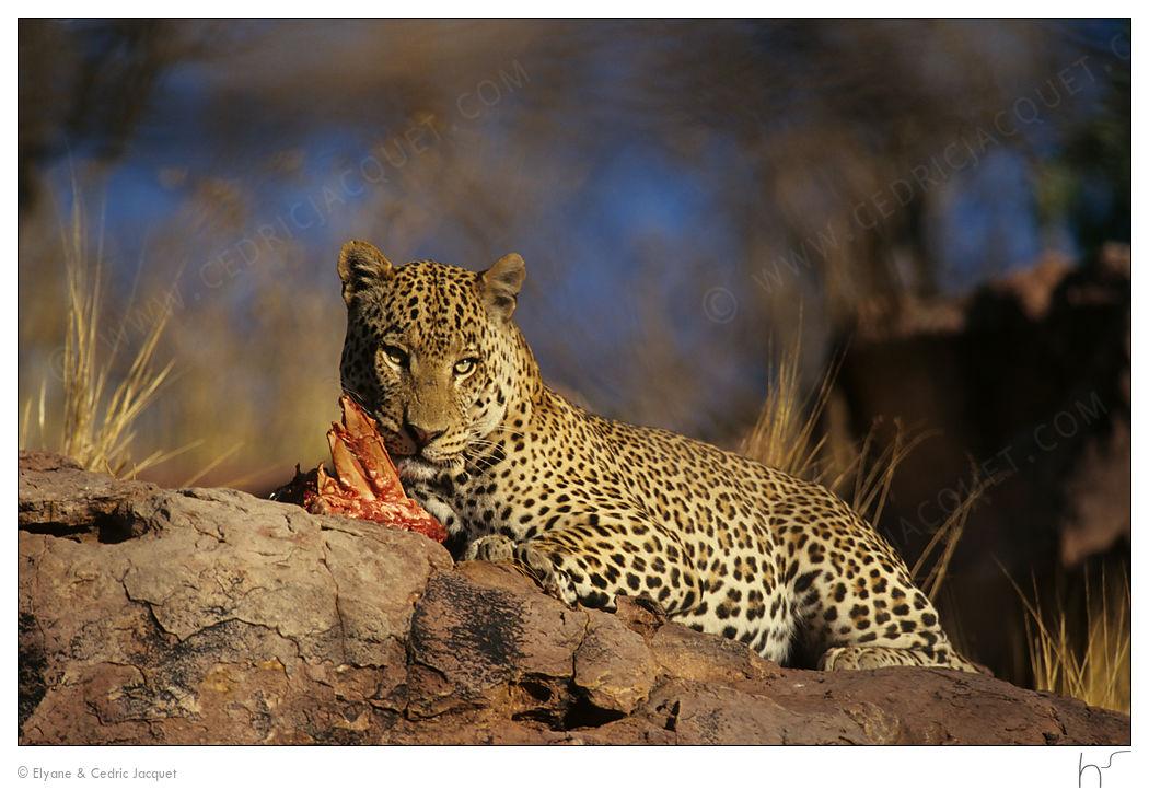 Afrique : Tanzanie, Malawi, Zambie, Mozambique, Zimbabwe, Botswana, Namibie, RSA, Lesotho, Swaziland. Pcj157342b