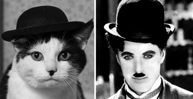 Humour ressemblance - Page 4 Personnalite-ressemble-animal-5