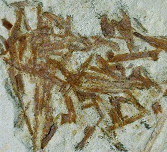 Fossil    الأحفورة    ..... الأحافير  4%20plant%20bits%20glynde%20detailss