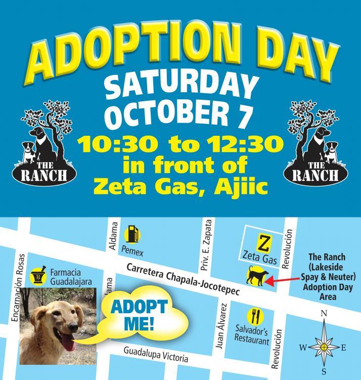Ranch Dog Adoption Day this Saturday - 7 October 59d662d7e4b48_ADPROMO750aug8.thumb.jpg.bb901ae9ddda83708e02b8a0343089f3