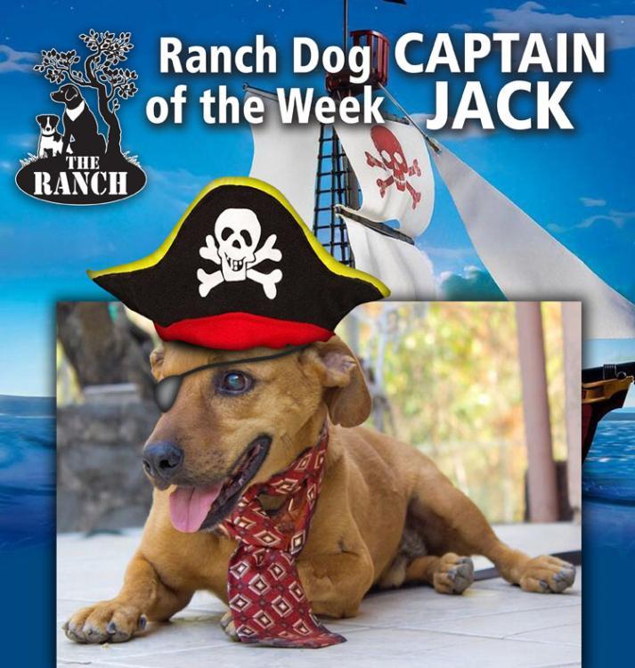 "Ranch Dog of the Week – ""Captain"" JACK... 59e78dbd1ed4b_RDOW_JACK750-1.thumb.jpg.9d0b0db1c0d716d85c6d4295655e820b"