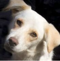 Ranch Dog Adoption Day this Saturday - 7 October Oden.png.9ca41d8ba051fd132c9e7eff9251d121