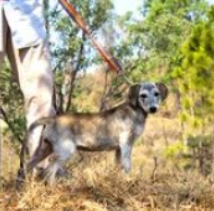 Ranch Dog Adoption Day this Saturday - 7 October Rosie-camo.png.50d0a7c47ac0622f0d2b5b87fd4ce125