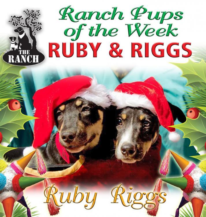 Ranch Puppies of the Week – Happy Holidays from Ruby & Riggs 5a39f4b68fa4b_RDOW_RUBYRIGS750.thumb.jpg.c57a73a7e2b14c4b5e05db5a3751d013