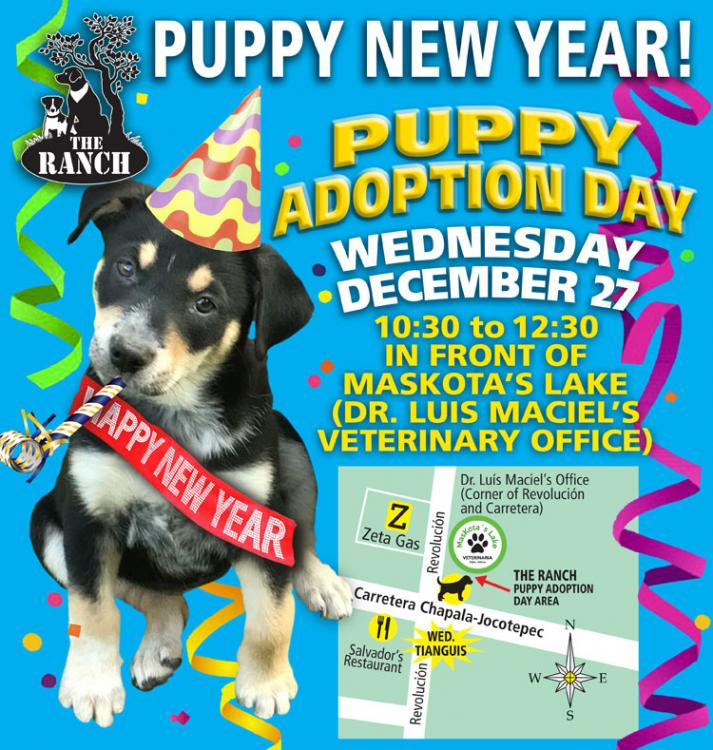 Ranch Puppy Adoption Day Wednesday 27 December 5a3eadc51b073_PUPPYNEWYEAR750.thumb.jpg.0c0a9b8e2a4d9ad0f3e4d951232ae776