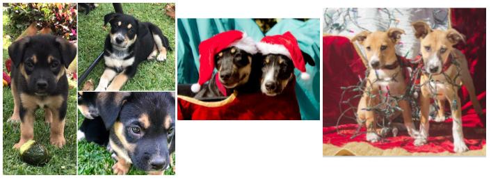 Ranch Puppy Adoption Day Wednesday 27 December ADpups27dec_001.png.e13e85d90db52fa6a1e5a64d16da1b9a