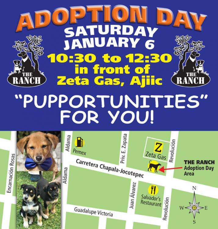 Ranch Puppy Adoption Day Saturday, 6 Januaary 5a4c276ab9e17_ADPROMO750_6jan.thumb.jpg.1a53d53cef8a68bcfce48d4e0a8a77bd