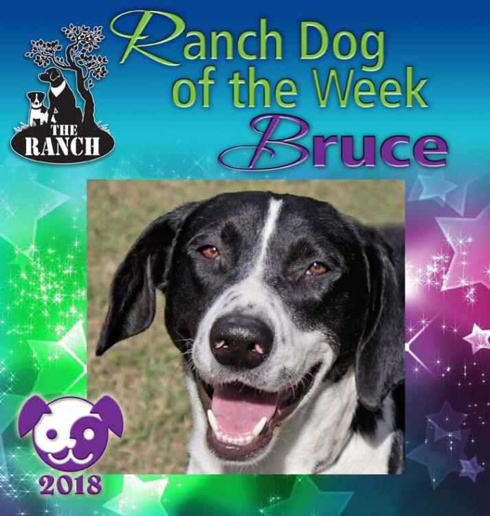 Ranch Dog of the Week – Sparkle Up Your New Year with BRUCE! 5a5e72bea03e0_RDOW_BRUCE750.thumb.jpg.96980c478ddaf53dbfcb00d7b2da3dae
