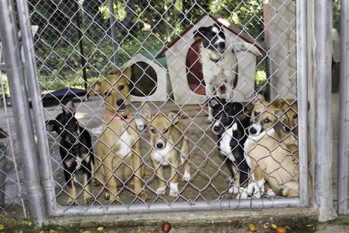 Ranch Puppy Adoption Day Wednesday 24 January 5a67b908bd4bf_jackoandhispups.jpg.2d3eb41748ea615e59773c6dd3a683c6